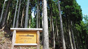 一般社団法人 more trees(モア・トゥリーズ)